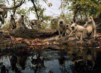 Wildlife at Bandhavgarh National Park