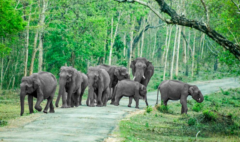 Image result for Bandipur Wildlife Sanctuary images