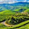 Places to visit in Coonoor
