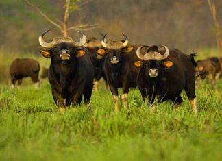 Things to do in Jaldapara Wildlife Sanctuary
