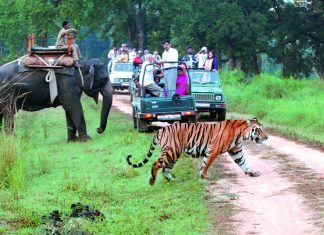 Places to visit in Jim corbett