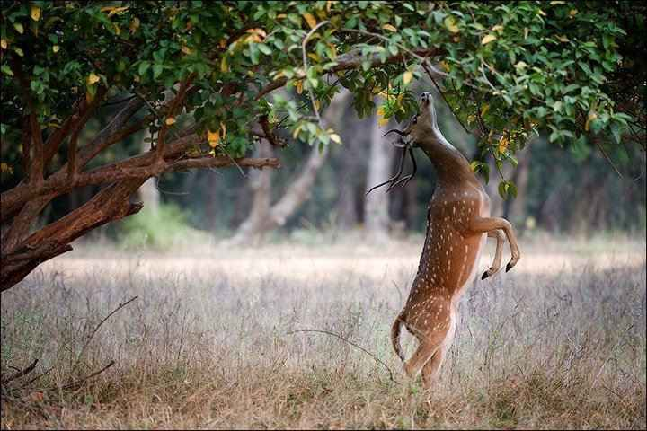 Things to do in Kanha National Park