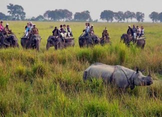Sight seeing, Things to do in Kaziranga National Park