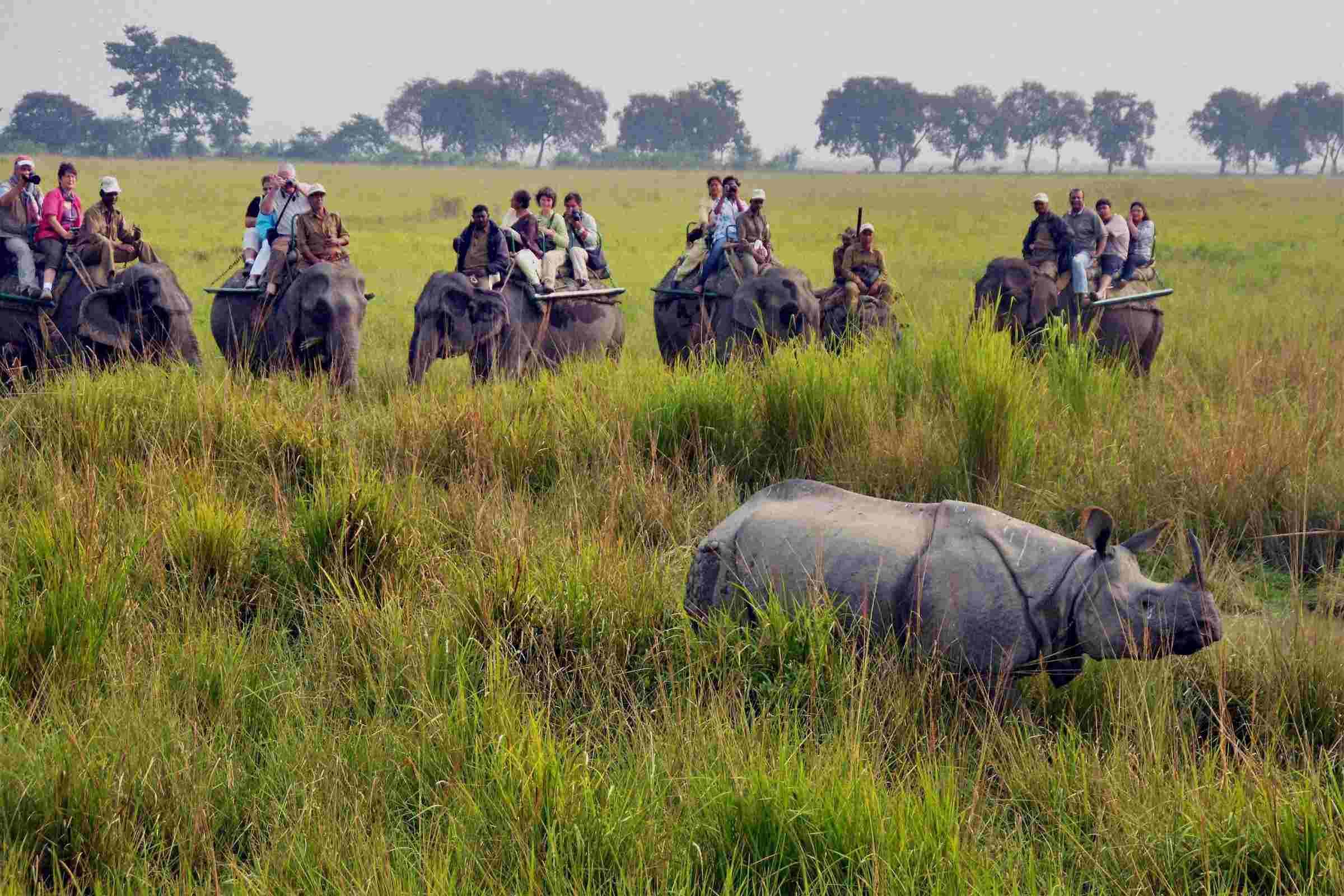 Sight seeing, Things to do in Kaziranga National Park
