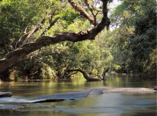 Places to visit in Madikeri