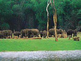 Nameri National Park - Places to visit