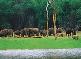 Nameri National Park - Places to visit