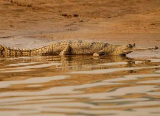 Places to visit in Chambal Wildlife Sanctuary