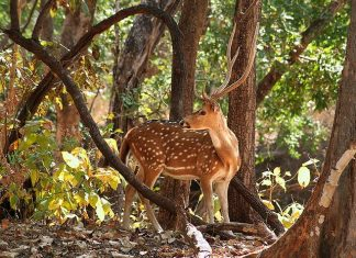 things to do in Pench National Park