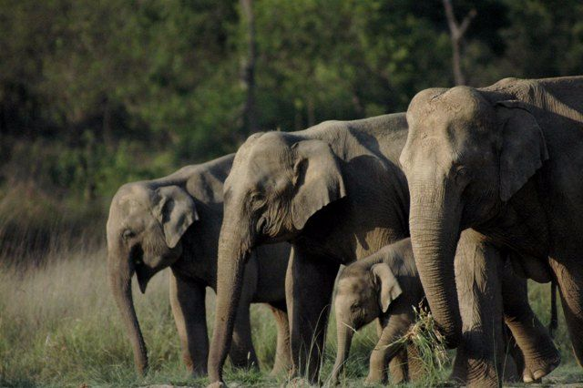 Places to visit in Rajaji National Park