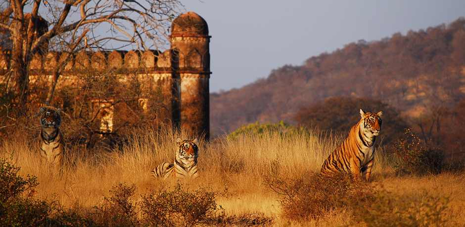 Places to visit in Ranthambore