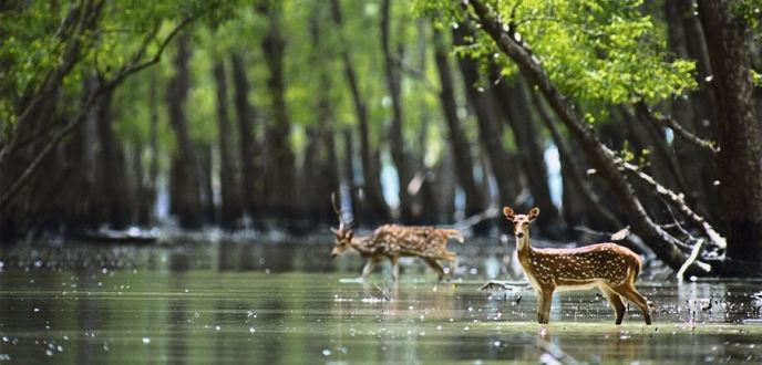 Places to visit in Sunderban