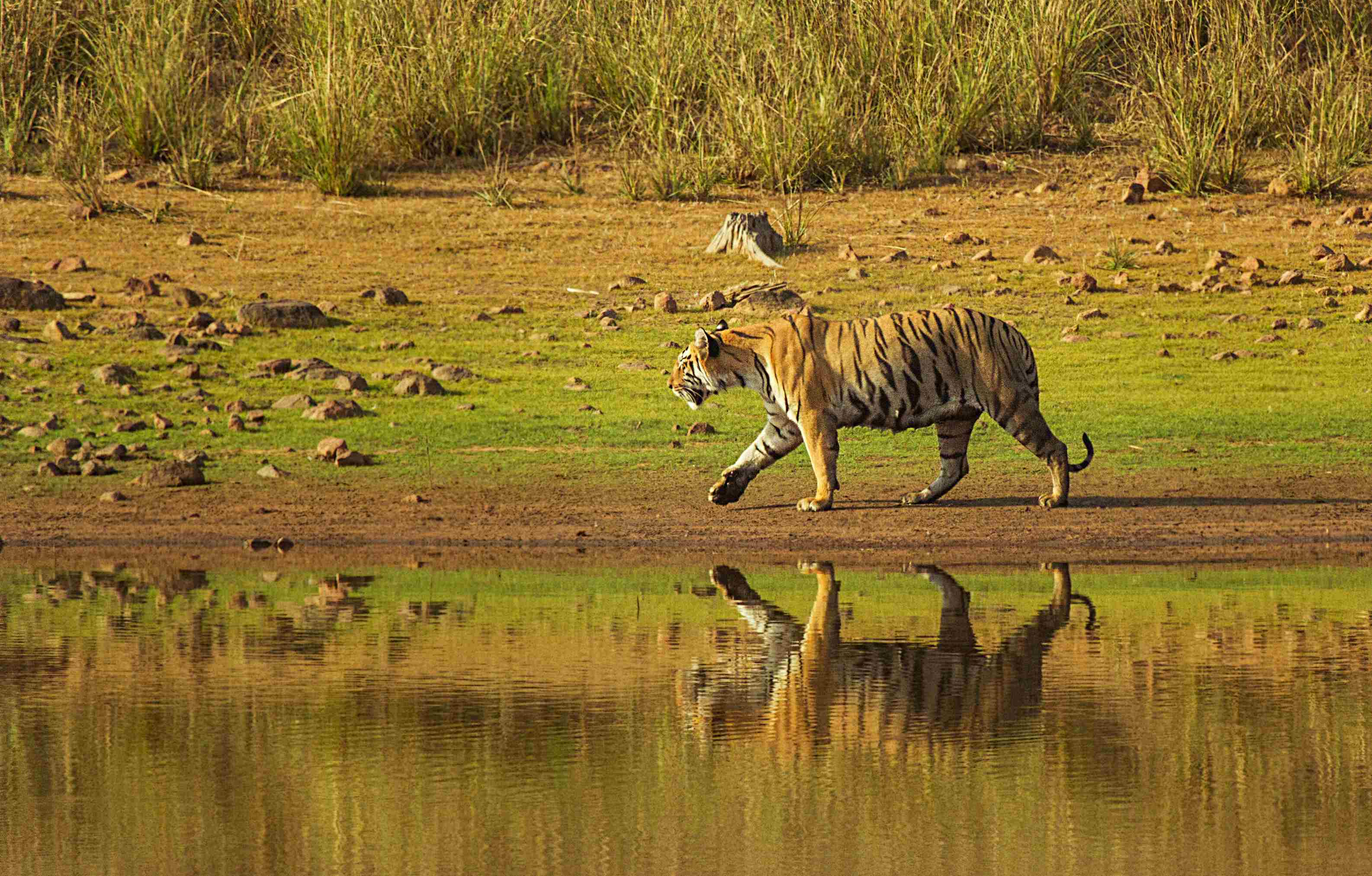 Places to visit in Tadoba