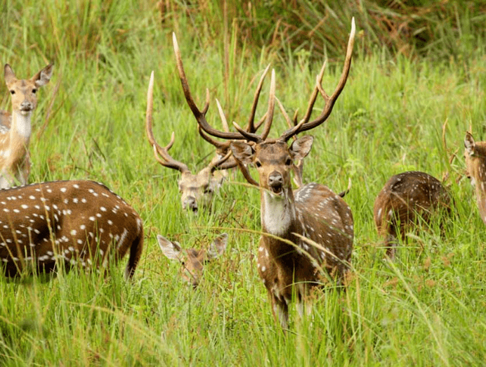 Wayanad Wildlife Sanctuary: