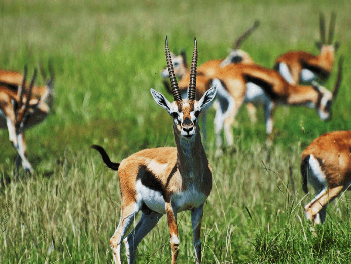 Itanagar Wildlife Sanctuary: