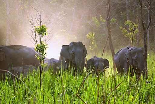 Things to do in Manas National Park