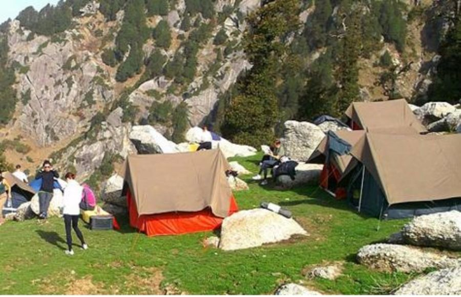 Dhauladhar Forest Camping