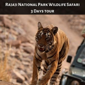 Rajaji National Park Wildlife Safari