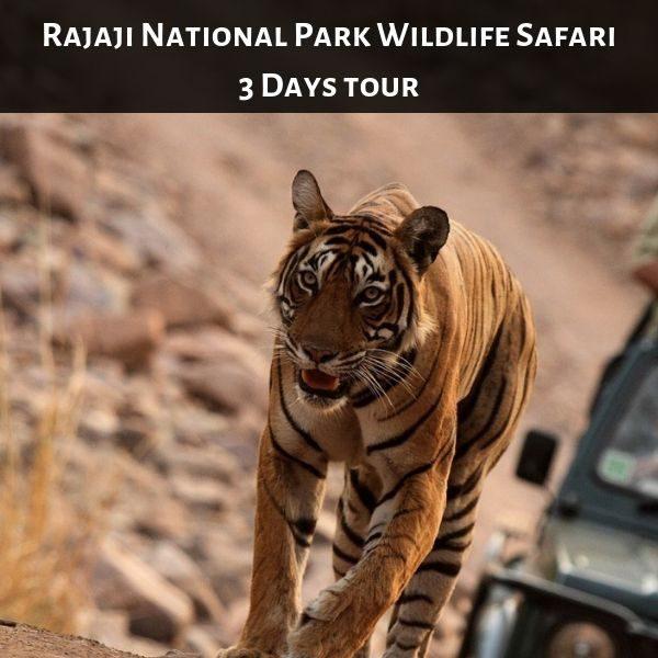 Rajaji National Park Wildlife Safari