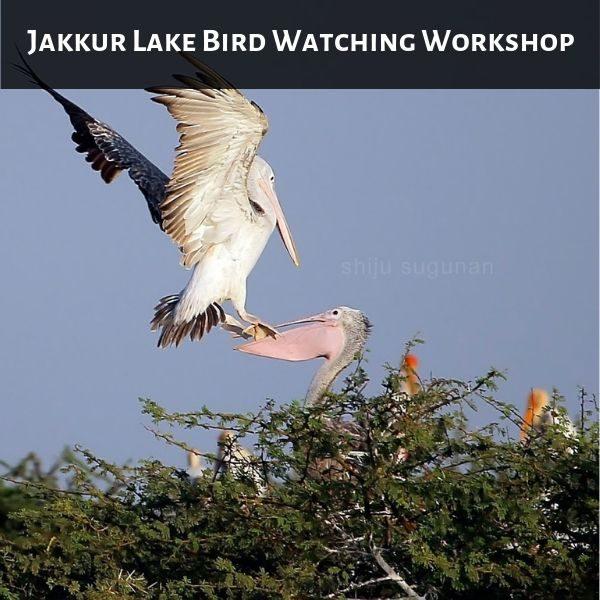 Jakkur Lake Bird