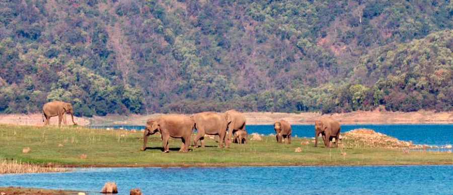 Rajaji Wildlife Safari