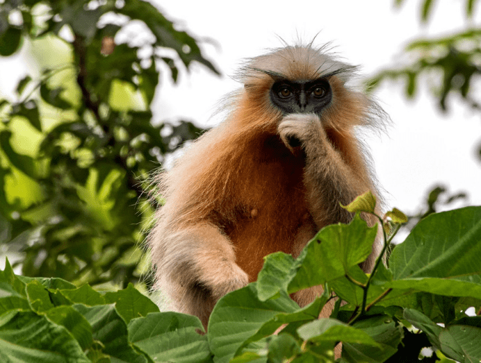 KakaiJana Wildlife Sanctuary