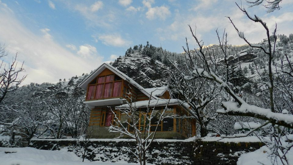 Tree House stay in Manali.