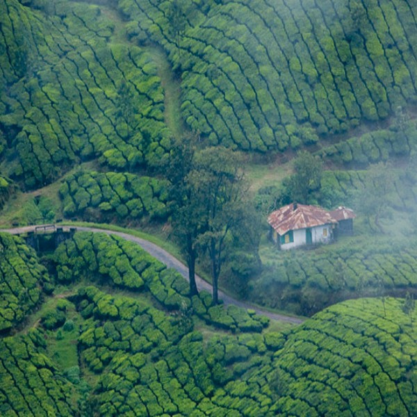15 Best Images About Kerala Tourism: 3 Night 4 Day Trip To Munnar,Cochin And Alleppey(3 Star