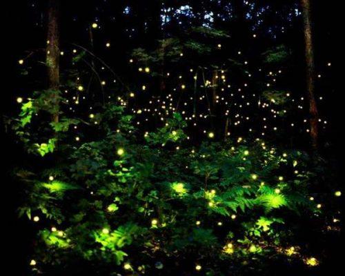 Fireflies-trek-with-MT-Mumbai-Travellers (1)-compressed
