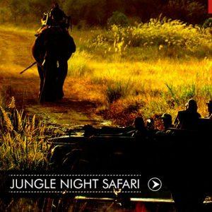 Jungle Night Safari at Bandhavgarh