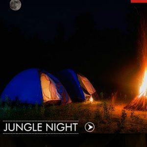 Jungle Night at Bandhavgarh