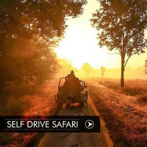 Selfdrive Safari Bandhavgarh