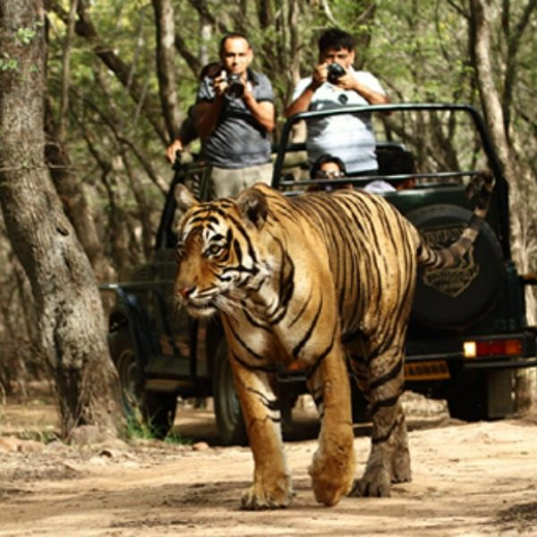 Image result for bandhavgarh national park madhya pradesh