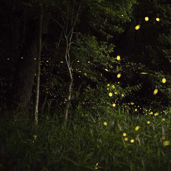Fireflies Trek to Prabalgad