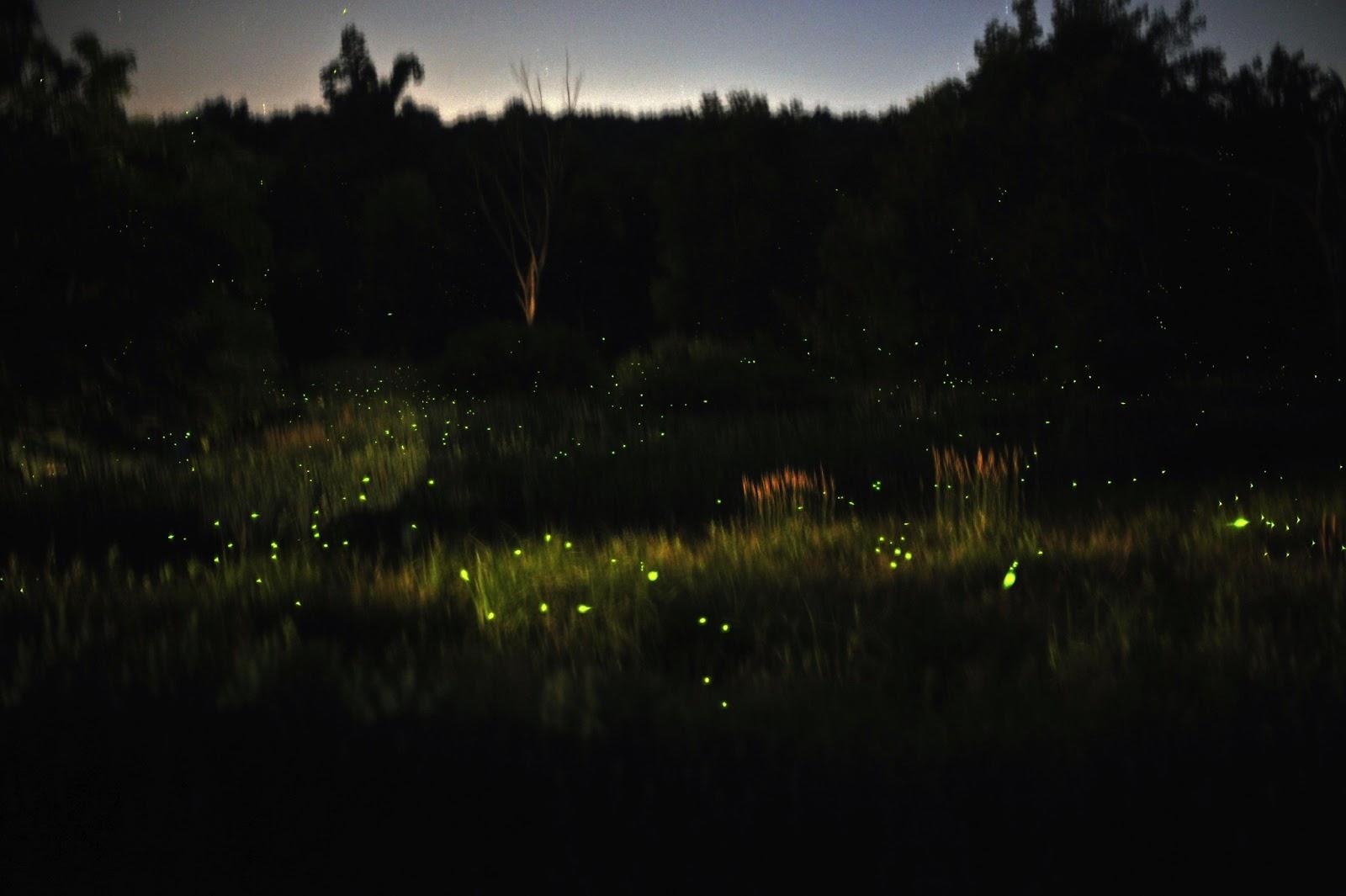 Fireflies Trek in Western Ghats