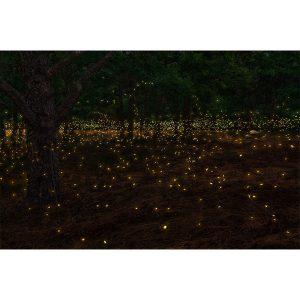 Fireflies at Rajmachi