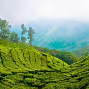 Kerala 3