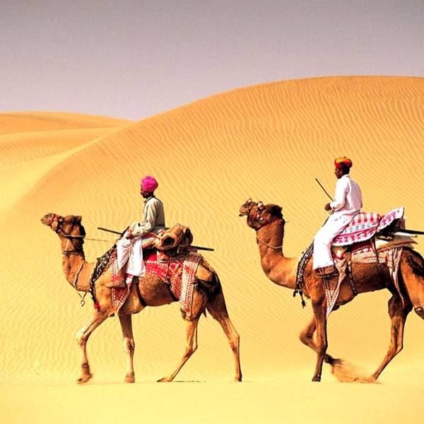 Camel ride, camel safari, Desert in Rajasthan