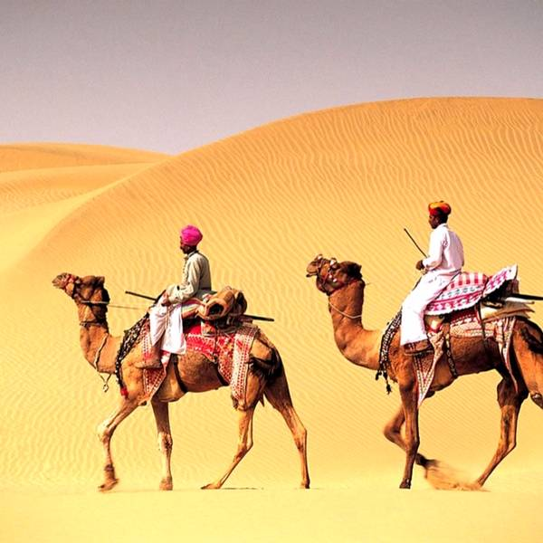 Camel ride, camel safari, Desert in Rajasthan