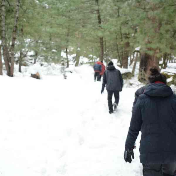 camp in manali