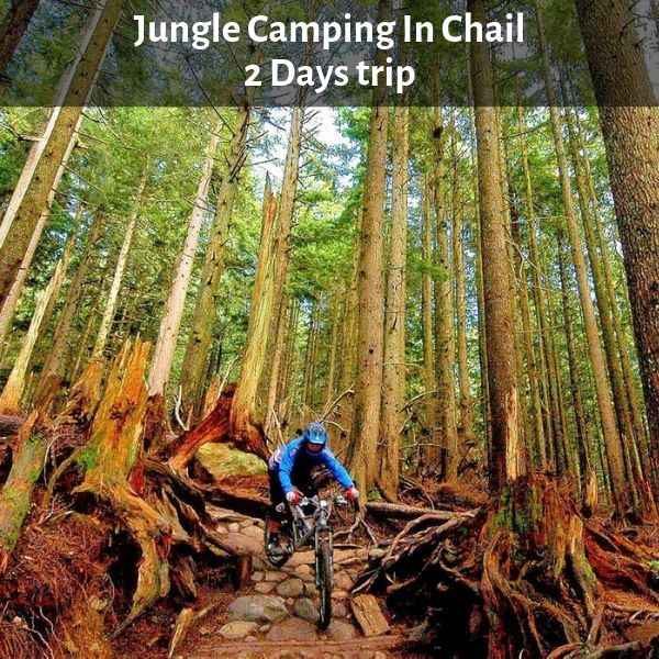 Jungle Camping In Chail