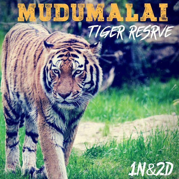 Stay In Mudumalai