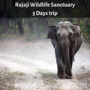 Rajaji Wildlife