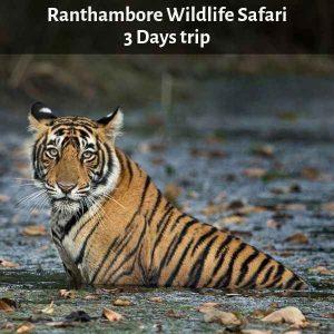 Ranthambore Wildlife