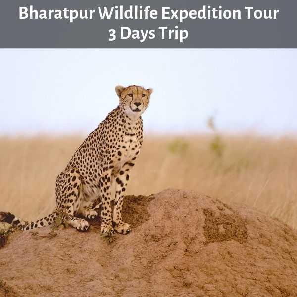Bharatpur Wildlife