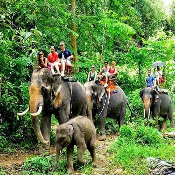 Elephant-Trekking Andaman