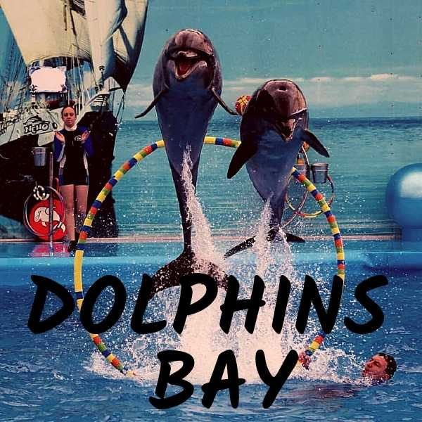 Dolphins bay