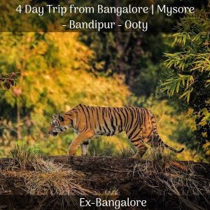 Mysore, ooty and bandipur trip