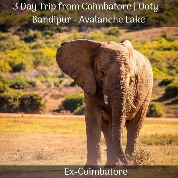 Bandipur safari Package