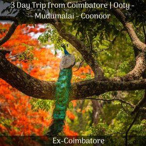 Coonoor trip